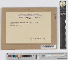 Coleosporium Campanulae /Pers./ Lev. f. sp.