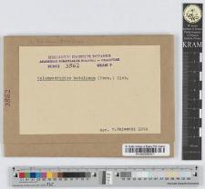 Melampsoridium betulinum (Pers.) Kleb.