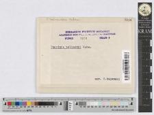 Puccinia Helianthii Schret.