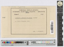 Puccinia Caricis /Schum./ Rabenh.