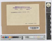 Coleosporium Synantherarum Fr n. i t. sp.