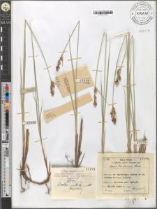 Carex Buxbaumii Wahlb.