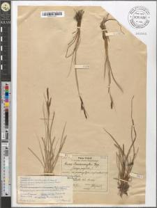 Carex Goodenoughii Gay.