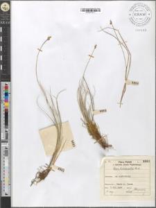 Carex heleonastes Ehrh.
