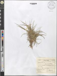 Carex hirta L. fo. humilis Peterm.