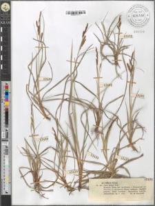 Carex glauca Scop.