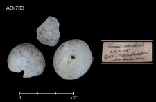 Monticola saxatilis