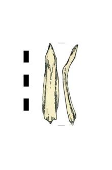 common sturgeon's bone
