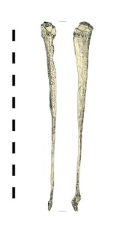 stitching awl, bone