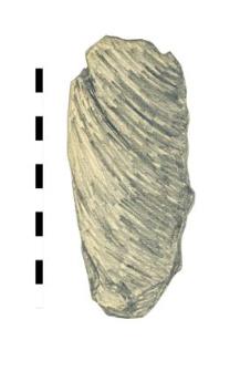 oak's fragment, worked