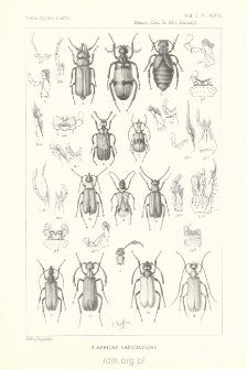 Descriptive catalogue of the Coleoptera of South Africa