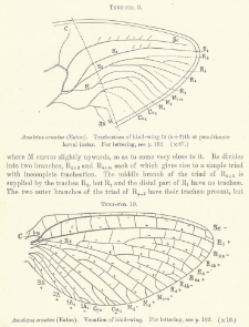 The Wing-Venation of the Order Plectoptera or Mayflies