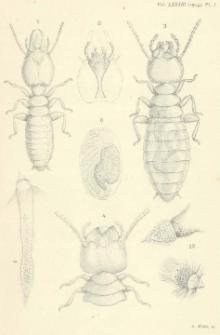 Le Termitogeton Umbilicatus HAG (de Ceylan)