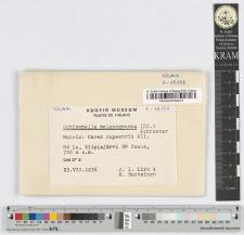 Schizonella melanogramma (DC.) Schroeter