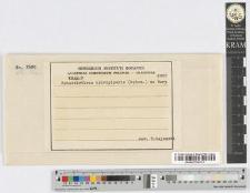 Sphacelotheca Hydropiperis (Schum.) DB.