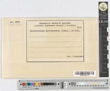 Sphacelotheca hydropiperis (Schum.) De Bary