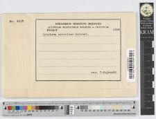 Entyloma serotinum Schroeter
