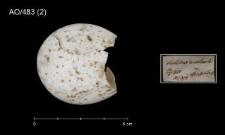 Scolopax rusticola