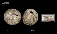 Burhinus oedicnemus