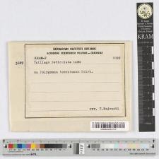 Ustilago utricolosa (Nees)