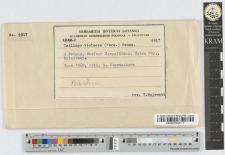 Ustilago lychnidis-dioicae (D.C.) Liro