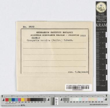 Tuburcinia occulta (Wallr) Liro