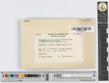 Urocystis fischeri Koernicke