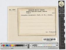 Tuburcinia Trientalis Schrt.