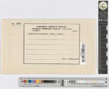 Urocystis anemones (Pers.) Rostr.