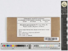 Microbotryum saponariae M. Lutz, Göker, M. Piątek, Kemler, Begerow. et Oberw.