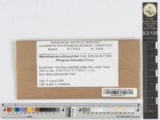 Microbotryum adenopetalae Lutz, Kemler & Chleb.