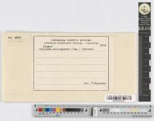 Entyloma microsporum (Ung.) Schroet.