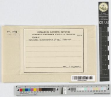 Entyloma microsporum (Ung.) Schroeter