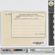 Entyloma microsporum (Unger.) Schroeter
