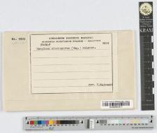 Entyloma microsporum Cif.