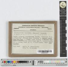 Exobasidium vaccinii (Fuckel) Woronin