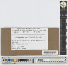 Exobasidium vaccini (Fuckel) Woronin