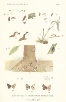 The larval gland in Lachnocnema Bibulus (Fab.)