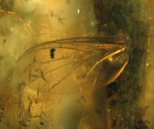 Diptera (skrzydło)