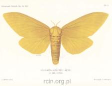 Beiträge zur kenntniss der insektenfauna von Kamerun. No. 11, Lepidoptera Heterocera