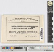 Hydnum fuligineo-album Schmidt.
