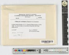 Clitocybe nebularis (Batsch: Fr.) Kummer