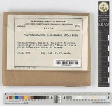 Clavariadelphus pistillaris (Fr.) Donk