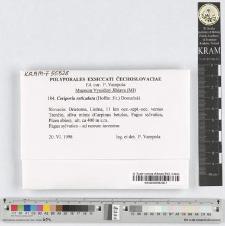 Ceriporia reticulata (Hoffm.:Fr.) Domański