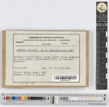 Athelia fibulata M. P. Christiansen 1960