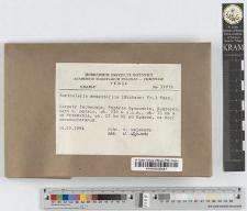 Auricularia mesenterica (Dickson: Fr.) Pers.