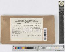Calocera viscosa (Pers.: Fr.) Fr.