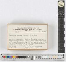 Calocera cornea (Batsch: Fr.) Fr.