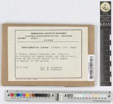 Camarophyllus lacmus (Schum.) J.E.Lange