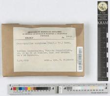Camarophyllus virgineus (Wulf.: Fr.) Kumm.